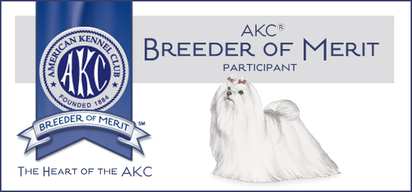 Maltese Forever | AKC Breeded of Merit award
