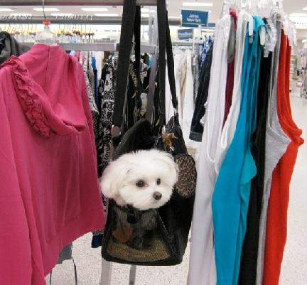 Massimo Shopping <br> Brooklyn, NY